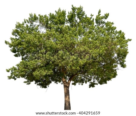Green tree isolated on white ( tiff file with layer masks )