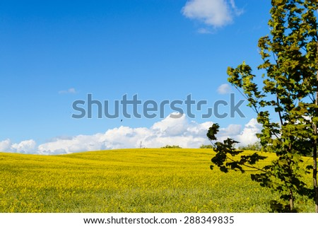 green tree leaves and yellow rapeseed field - stock photo