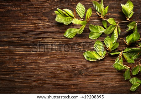 Green tree leaves on wooden background close up. - stock photo