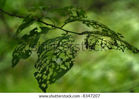 Green tree leaves with holes eaten by insects.