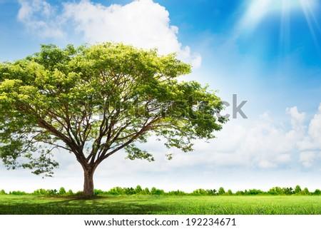 Green tree nature landscape - stock photo