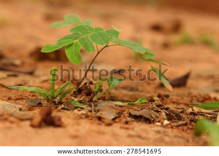 Green tree on a background of leaves. - stock photo