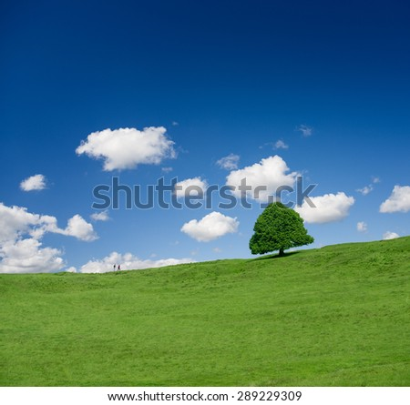 Green tree on a green field on a bright day of spring/green tree on the field/tree - stock photo