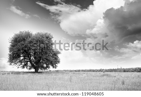 green tree on a turning summer meadow - stock photo