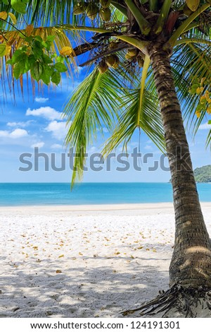 Green tree on a white sand beach.