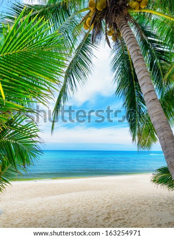 Green tree on a white sand beach. - stock photo