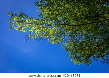 green tree on blue background. - stock photo