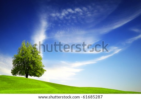Green tree on blue sky - stock photo
