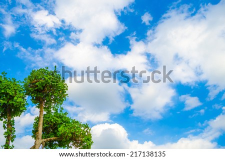 Green tree on blue sky background - stock photo
