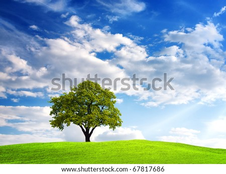 Green tree on cloudy sky - stock photo
