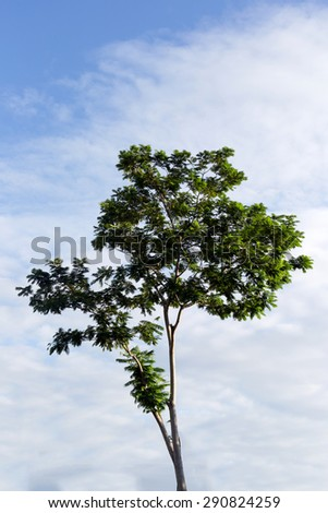 Green Tree  on  sky background - stock photo