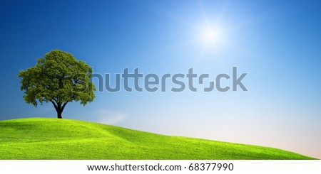 Green tree on the meadow - stock photo