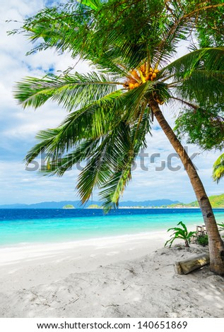 Green tree on  white sand beach. Malcapuya island, Palawan, Philippines. - stock photo