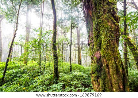 green tree rain forest in autumn season of thailand