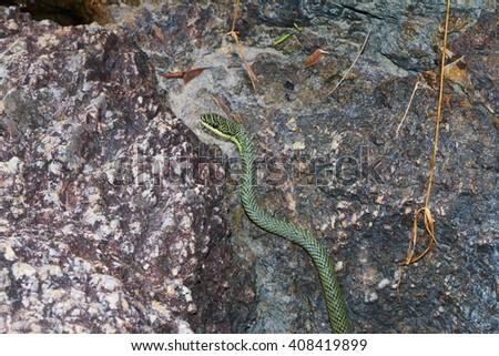 green tree snake, thailand - stock photo