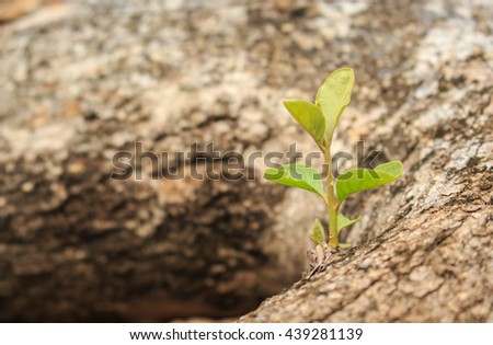 green tree sprout plants growing hope ecology on forest background