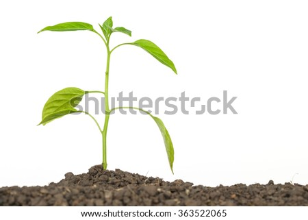 green tree sprout plants growing hope ecology on white background