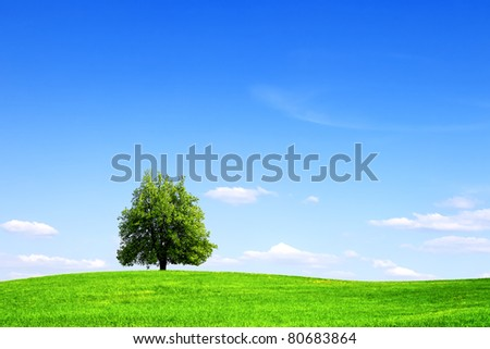 Green tree, summer landscape