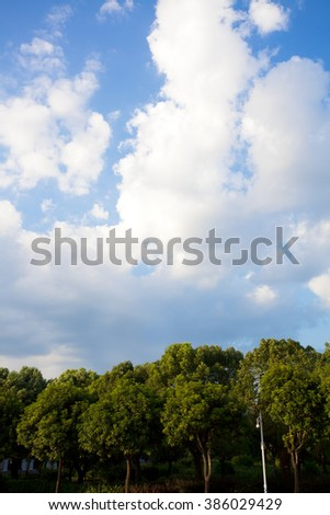 Green tree under blue sky with fluffy clouds.