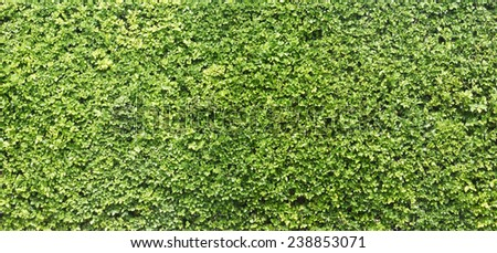 Green tree wall texture - stock photo