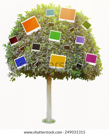 Green tree with color photo cards isolated on white - stock photo