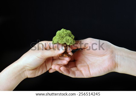Green trees and human hand