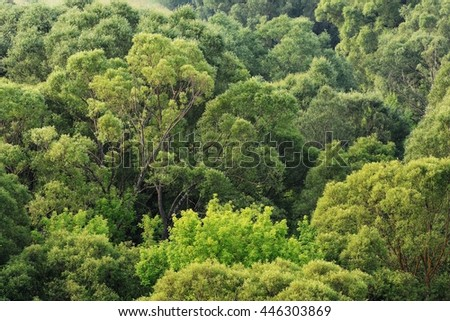 Green trees crowns background