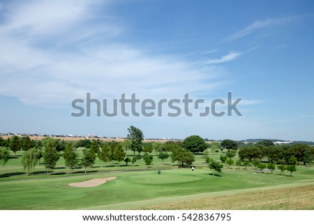 Green trees in beautiful park over blue sky