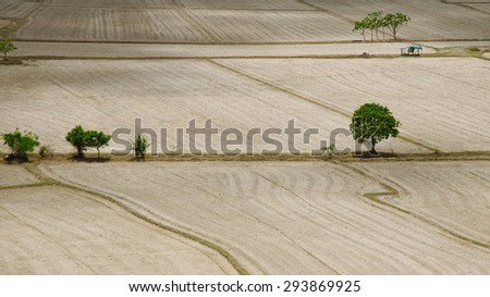 Green trees in dry field - stock photo