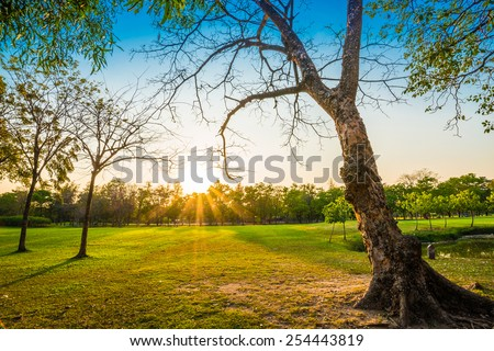 Green trees in park and sunlight in evening - stock photo