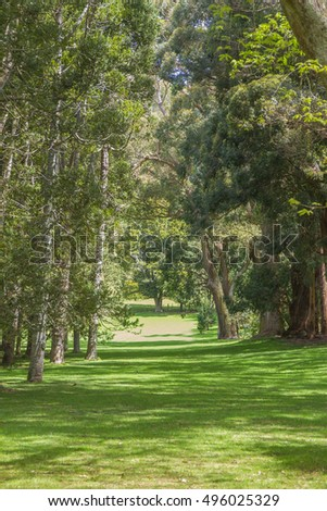 green trees in park, outdoor picture