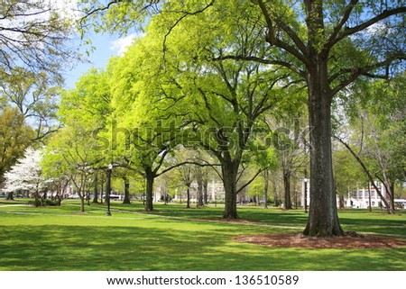 Green Trees in Spring - stock photo
