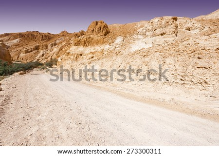 Green Trees in the Rocky Desert Canyon in Spring, Israel - stock photo