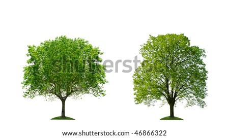 Green trees isolated - stock photo