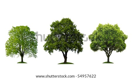 Green trees isolated on white - stock photo