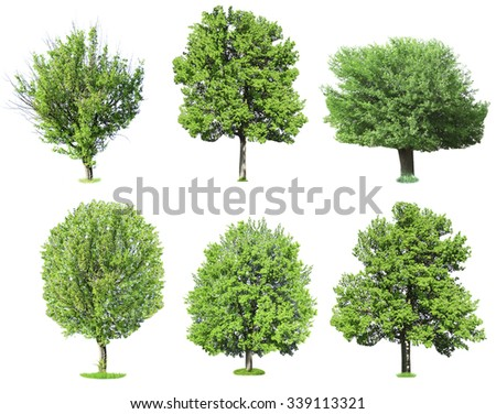 Green trees, isolated on white background - stock photo