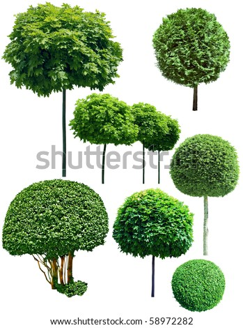 green trees isolated on white background - stock photo