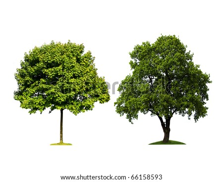 Green trees on a white background - stock photo