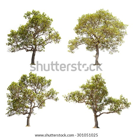 Green trees over white, isolated - stock photo