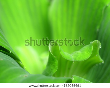 Green tropical floating water plants close up with nice background - stock photo