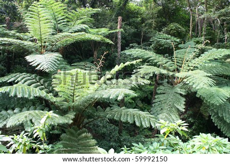 green tropical forest - stock photo