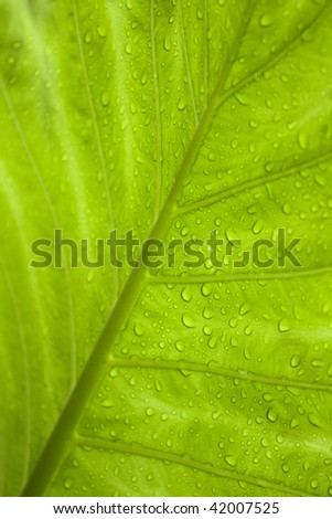 Green tropical leaf with raindrops. - stock photo