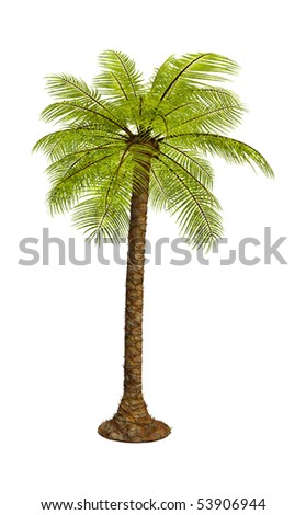 green tropical palm on the white background