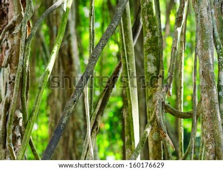 Green tropical rainforest. Green background. - stock photo