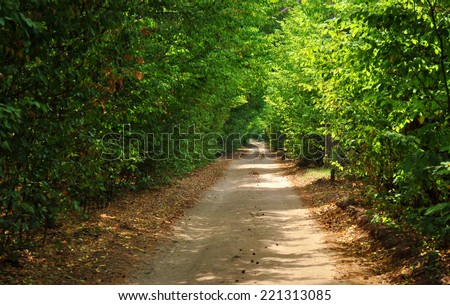 green tunel forest road - stock photo