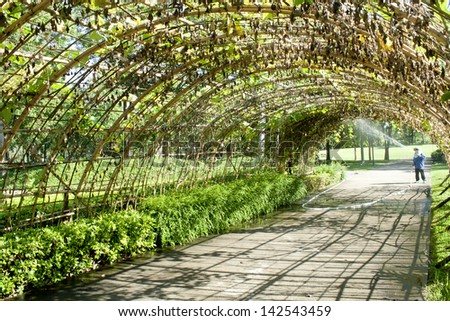 Green tunnel made from calabash plant