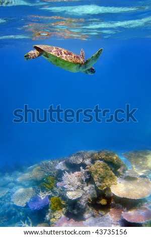 Green turtle and coral in ocean at Great Barrier Reef, Australia - stock photo