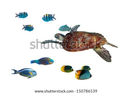 Green turtle and tropical fishes isolated over white - stock photo