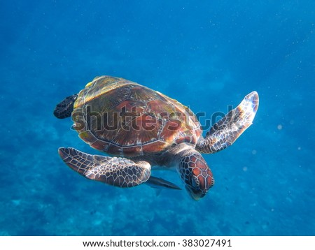 Green Turtle,andaman sea,