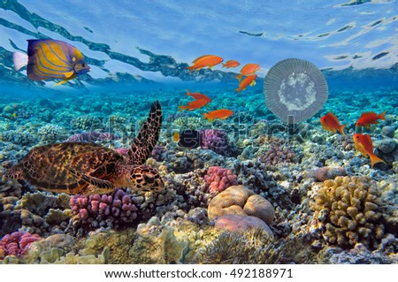 green turtle (Chelonia mydas) and Coral Reef Scene with Tropical Fish, Red sea, Egypt.